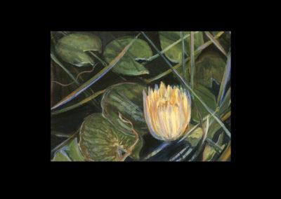 "Dorland Pond #76, 2003, oil on canvas, 6"" x 8"""