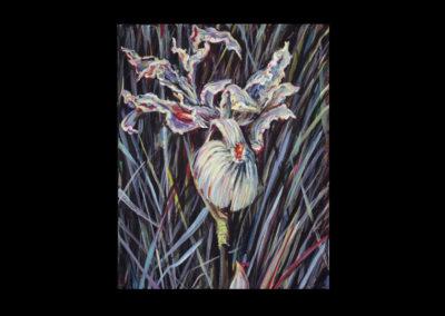 "Rim, Wild Iris #18, 1990, acrylic on linen, 14"" x 11"""